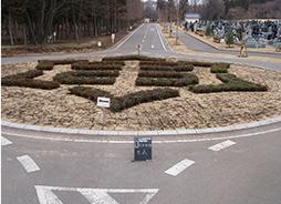道路の緑地帯